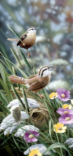 Wrens -- by Bradley Jackson .wonderful shot of the birds, nest, and flowers! Pretty Birds, Love Birds, Beautiful Birds, Animals Beautiful, Cute Animals, Simply Beautiful, Kinds Of Birds, Backyard Birds, Mundo Animal