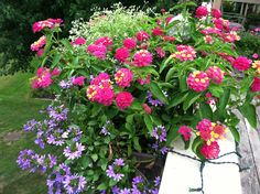 Love lantanas. They are just what I need in the summer - so easy to take care of.