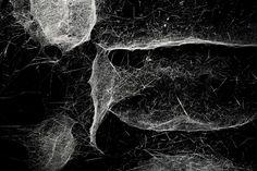 Tomas saraceno.Installation- spider(Cyrtophora citricola) 4 weeks.