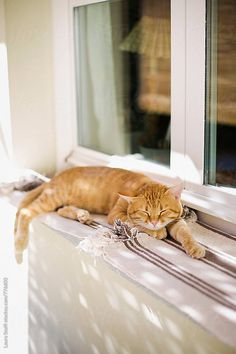 Portrait of cat sleeping outdoor behind curtains on windowsill by Laura Stolfi Orange Tabby Cats, Red Cat, Kittens Cutest, Cats And Kittens, Cats Meowing, Cool Cats, I Love Cats, Gatos Cats, Curious Cat