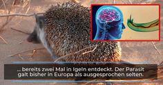 Lunge, The Human Brain, Majorca