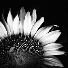 like the photo, but a sunflower isn't a sunflower without the colour :/