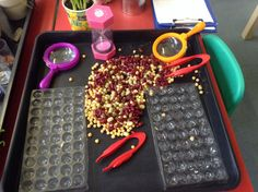How many circles can you fill with beans before the timer runs out? Can you do it again and beat your first score?! Counting, sorting  fine motor skills. Also used as an investigation area where children can use their senses to explore the different types of beans.