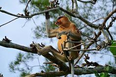 Bako National Park- Sarawak (Borneo) Mijn favoriete wildlife hotspots in Azië