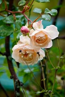Dress It Down: Flowers - apricot garden roses #Wedding in #Fall