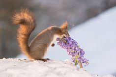 flower for passion by geertweggen via http://ift.tt/2i4rLbv