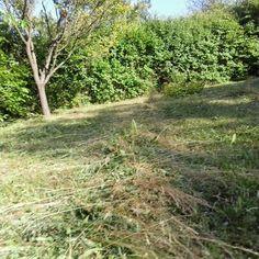 Frissen kaszált fűben fetrengés                     ketcica készítette ezt a képet. Country Roads, Plants, Plant, Planets