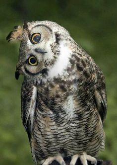 Owl what ya doing