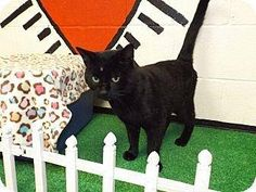 **ULTRA ULTRA URGENT** ***PLEASE ASK FOR A HOLD TO BE PUT ON IF YOU CAN SAVE!!!*** BEAUTIFUL ALL-BLACK MALE ADULT, (ID# 2308). AT FLOYD COUNTY ANIMAL CONTROL, 431 MATHIS ROAD, ROME, GA (706) 236-4545 & (706) 236-4537. jbroome@floydcountyga.org PLEASE SAVE ME!!!