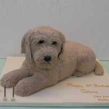 Labradoodle cake by Cakes f Fun Ltd