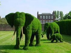 Topiary elephants - Just as good as real elephants. Ornamental gardens with bushes trimmed and grown into the shapes of animals. Usually lends a sense of quirkiness to what would otherwise be a rich person's stuffy garden. The possibility of the animals coming the life by magic seems to be common. May be accompanied by a Hedge Maze.