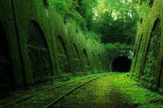 This tunnel is part of an abandoned rail line that circles Paris called the Petite Ceinture. It was built in 1852 to connect the Gares of Paris. It was abandoned in the 1930s because the Paris Metro was more efficient at moving people around.
