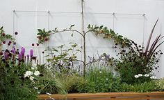 Sharon Hockenhull award winning garden, Be Fruitful, at RHS Tatton Park Flower Show Featuring the Green Wall System as an espalier support.