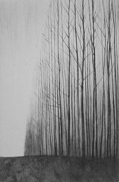 From the Trees (etching) by Philippa Jones
