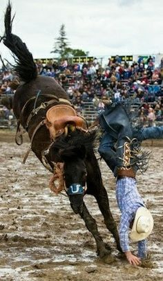 a cowboy handstand Rodeo Cowboys, Real Cowboys, Zebras, Western Riding, Western Art, Bucking Bulls, Rodeo Queen, Rodeo Life, Cowgirl And Horse