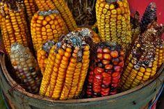 """Monsanto responde: """"La resistencia es por desinformación"""""""