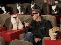 Antonio Banderas... and cats