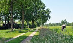 Natuurhuisje 31614 - vakantiehuis in Balkbrug