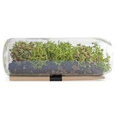 Sedum Terrarium Bottle