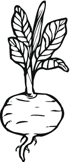 Gallery for lettuce drawing lettuce turnip the beet for Turnip coloring page