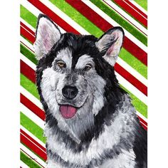 Alaskan Malamute Candy Cane Holiday Christmas Ultra Beverage Insulators for slim cans Halloween Artwork, Christmas Artwork, Alaskan Malamute Red, Bud Lite, Flag Decor, Print Artist, Doge, Candy Cane, American Flag