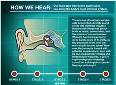 HearSayLW: The Ear Book: An interactive guide to the various parts of the ear.