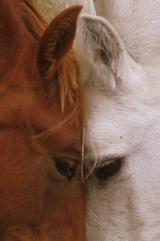 """Let's put our heads together"" #cutehorses"