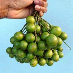 Jamaican Guinep Fruit | Jamaican Foods and Recipes Guava Fruit, Lychee Fruit, Bone Apple Tea, Broccoli Salad With Raisins, Bare Fruit, Star Apple, Caribbean Recipes, Caribbean Food, Apple Fruit