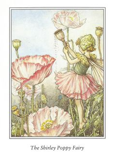 Shirley Poppy Fairy Cicely Mary Barker by OLDBOOKSMAPSPRINTS