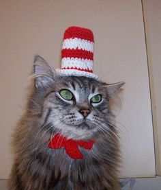 cat in the hat costume