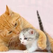 """Résultat de recherche d'images pour """"photo de chat trop mignon"""""""
