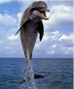 ** Dolphin