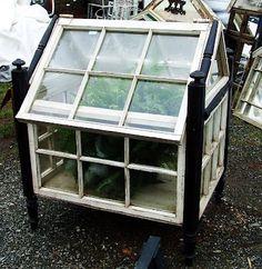 Mini-greenhouse using old window frames. Old Window Greenhouse, Diy Greenhouse Plans, Small Greenhouse, Greenhouse Gardening, Outdoor Greenhouse, Vintage Windows, Old Windows, Old Window Frames, Window Art