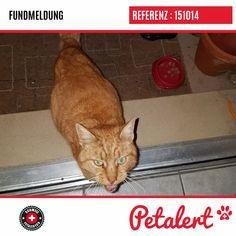 07.01.2019 / Chat / EšJura / Suisse Cats, Switzerland, Animaux, Gatos, Kitty Cats, Cat Breeds, Kitty, Cat, Kittens
