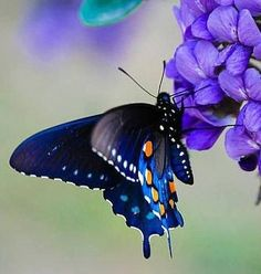 We are like butterflies who flutter for a day and think it is forever. — Carl Sagan