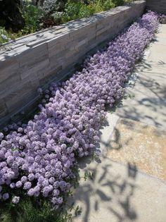 ガーデン施工事例 / ガーデン テラス デザイン、パラソル、石材、植物、へーベル 庭