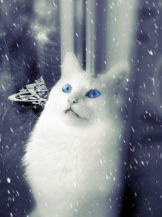 it's snowing © Kari Meijers
