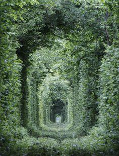 Unused Railway Track in Ukraine Forms into 'Tunnel of Love'