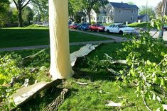 A tree's bark was blown off after being struck by lightning