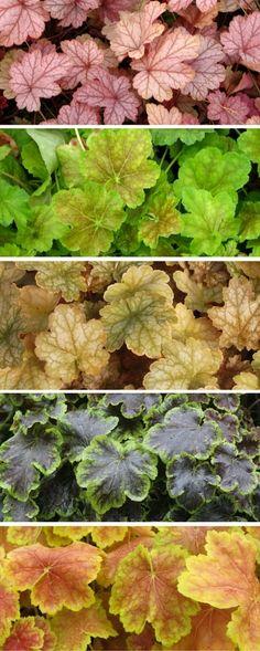 Plantes d 39 ombre pour le jardin en 25 photos fascinantes for Repousse amaryllis