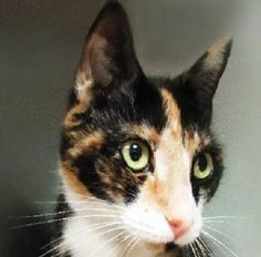 ***TO BE DESTROYED 06/30/16*** TWINKLES IS A 1 YEAR OLD PRISONER, HELD HOSTAGE AT THE ACC... THE ONLY TRADE TO SAVE HER LIFE IS YOU! This gorgeous CALICO girl is AVERAGE RATED and acted like a gem but now isn't too happy knowing that her life has a price! YOU! Offer to FOSTER OR ADOPT TWINKLES and be e the ransom she so desperately NEEDS!!