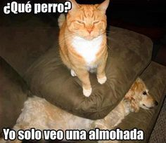 gatos chistoso