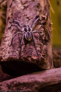 how to get rid of wolf spiders in pool