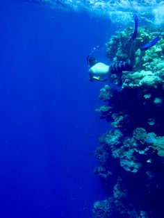 Coral reef in Dahab, Egypt I WOULD LOVE TO DIVE THIS REEF;)