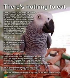Sounds about right! My lovebird wouldn't even look at anything that wasn't his normal seed or apple!
