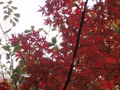 Autumn view, somewhere Japan