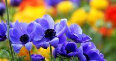14 Flores que Toleran el Calor - Jardinería