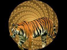 Tiger Transformation Hypnosis
