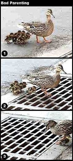 Bad parenting...how many people do u know like this....please pray for the ducklings!!