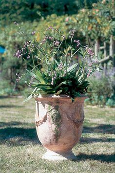 Anduze Vase Antica